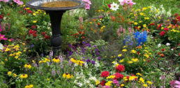 Make your own butterfly garden